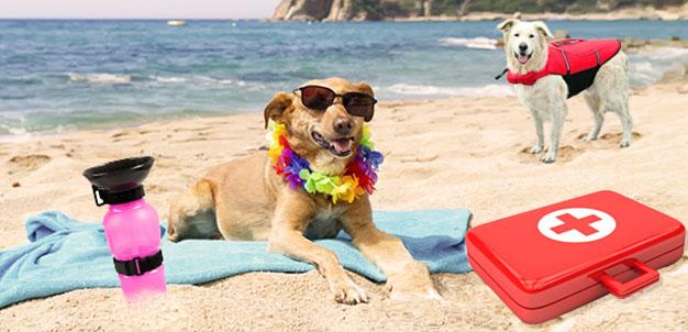 mare, spiaggia, cani