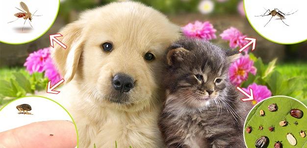 parassiti esterni cane e gatto: pulci zecche pappataci zanzare