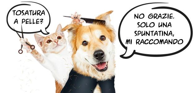 tosatura-e-mantello-cane