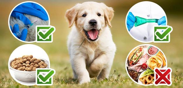 Gastroenterite cane