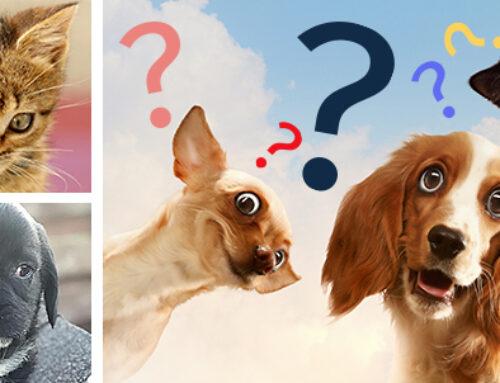 Giardia nel cane quanto dura Tenă la oameni pastile de tratament