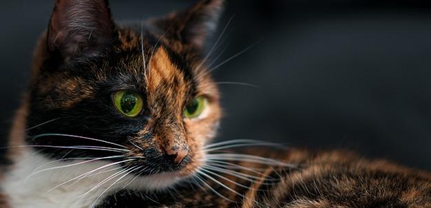I baffi del gatto ovvero le vibrisse