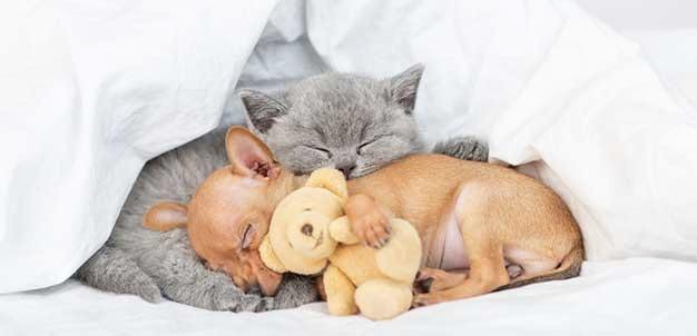 sonno-e-sogni-di-cani-e-gatti